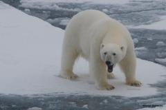 SvalbardBEST-1093
