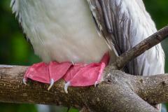B_Xmas_Birds_039