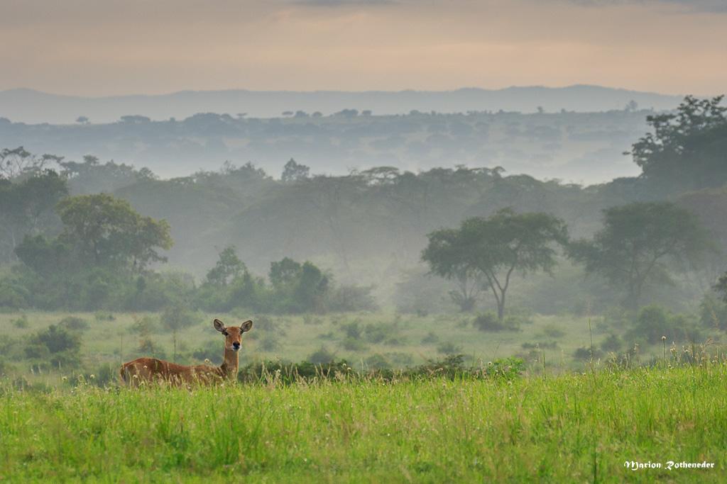 Uganda_A_381 - Kopie