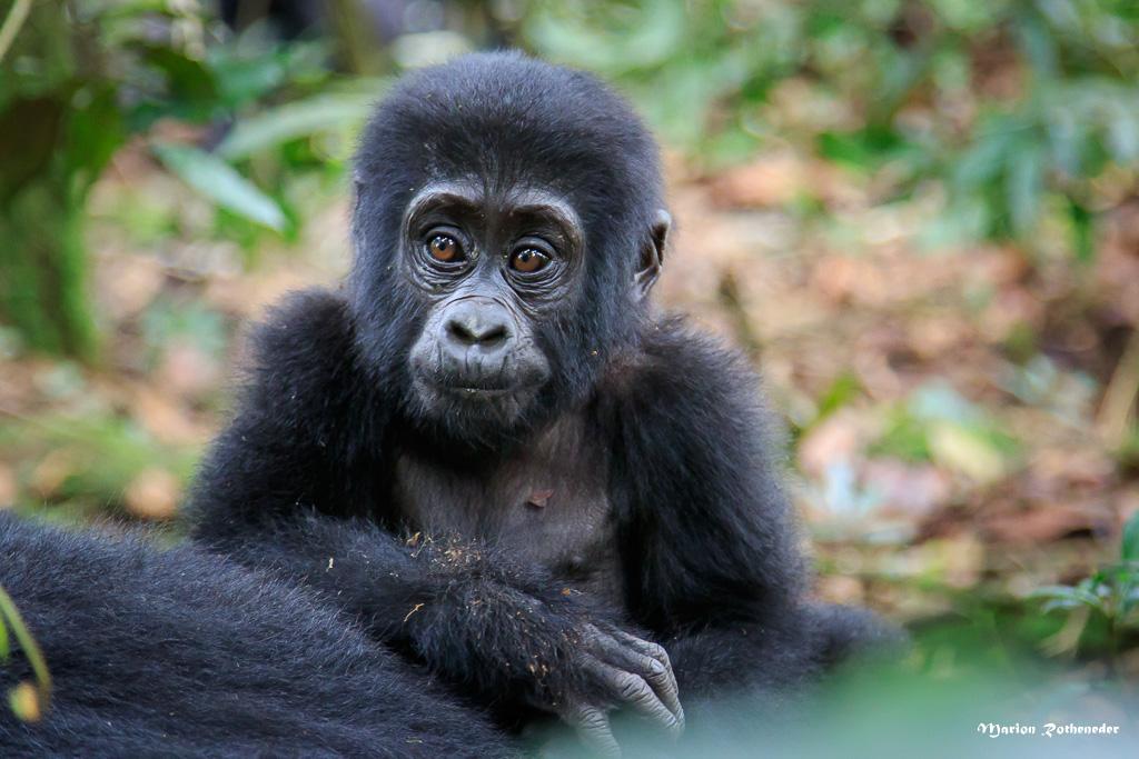 Uganda_B_024 - Kopie