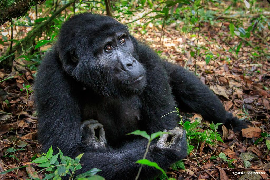 Uganda_B_039 - Kopie