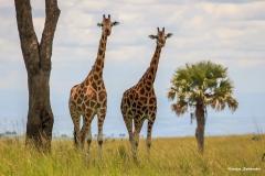 Uganda_A_040 - Kopie