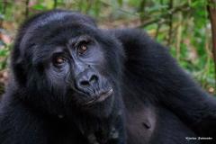 Uganda_B_044 - Kopie