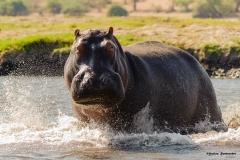 Chobe-River_0221