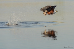 Chobe-River_0521